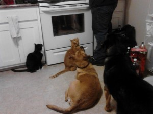 all 4 fur kids