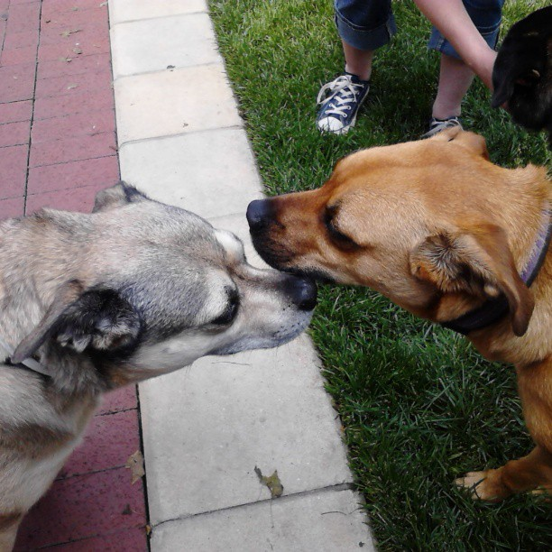 Jazzy carefully greeted an older dog at the Farmers Market.