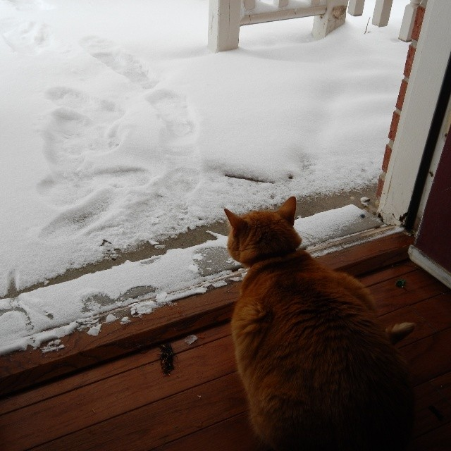 This is the only cat/snow related pictures we have. Neither one was real keen on going out in the white cold stuff. I think they remembered it from Bentonville and were annoyed that we humans brought it with us to Elkins. HA!