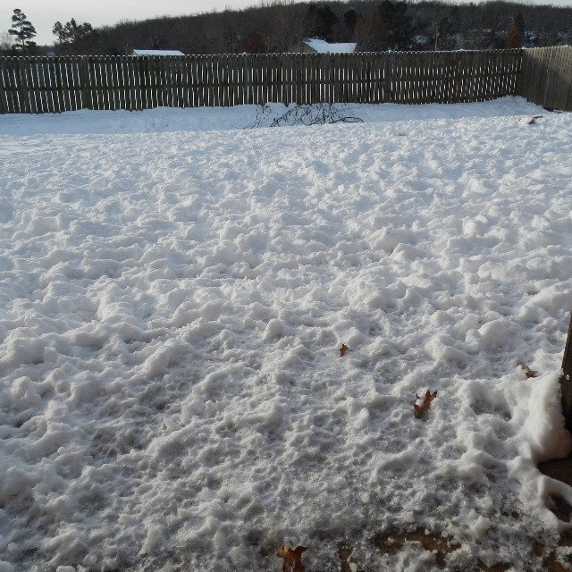 Our yard after the dogs spent much of the day playing in it.