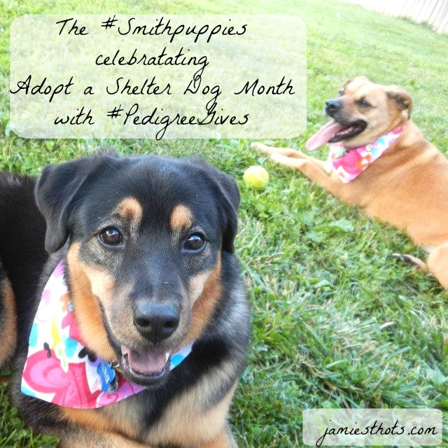 Shop_Pedigree_Hero_Smithpuppies