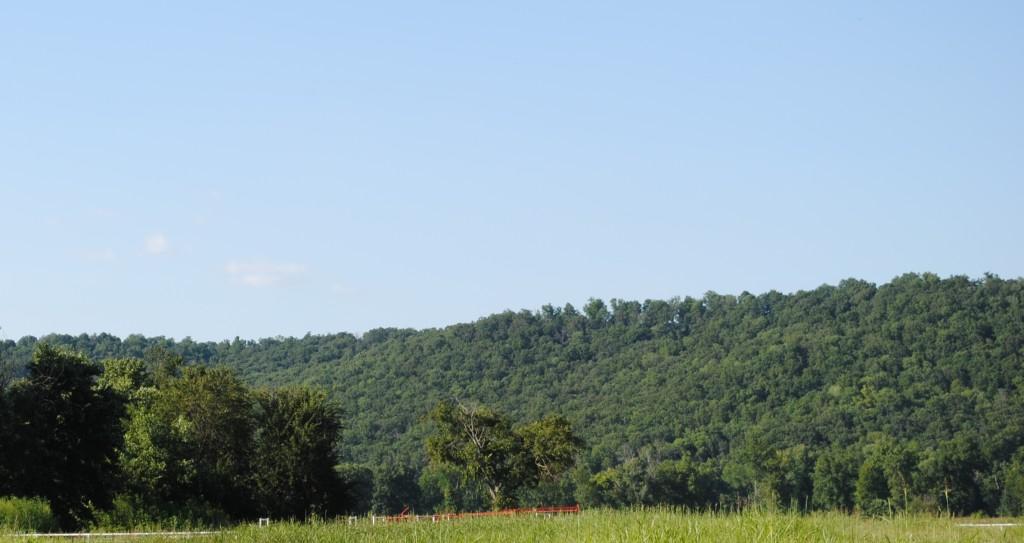 OIA Elkins Landscape