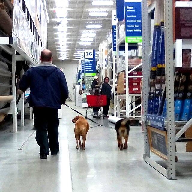 We went to Lowe's a few weeks ago to get things for the house and yard. Most Lowe's let you bring well-behaved, leashed dogs to the store. The #Smithpuppies love visiting Lowe's! They always get lots of attention.