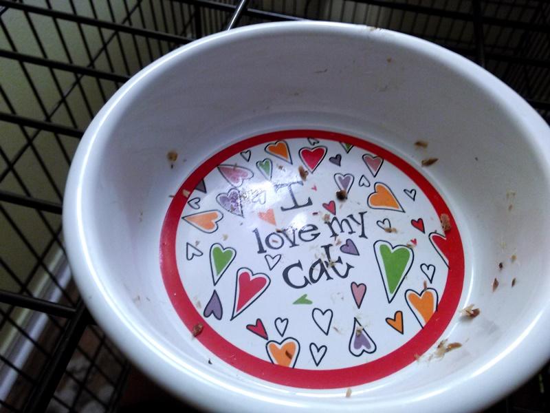 Missy's dish.
