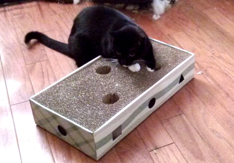 This was the night she figured out there was a smelly and loud ball underneath her scratcher. It only took her a few minutes to learn how to completely remove it.