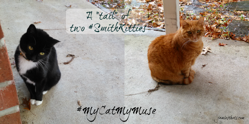 Shop_Muse_Smithkitties_Hero