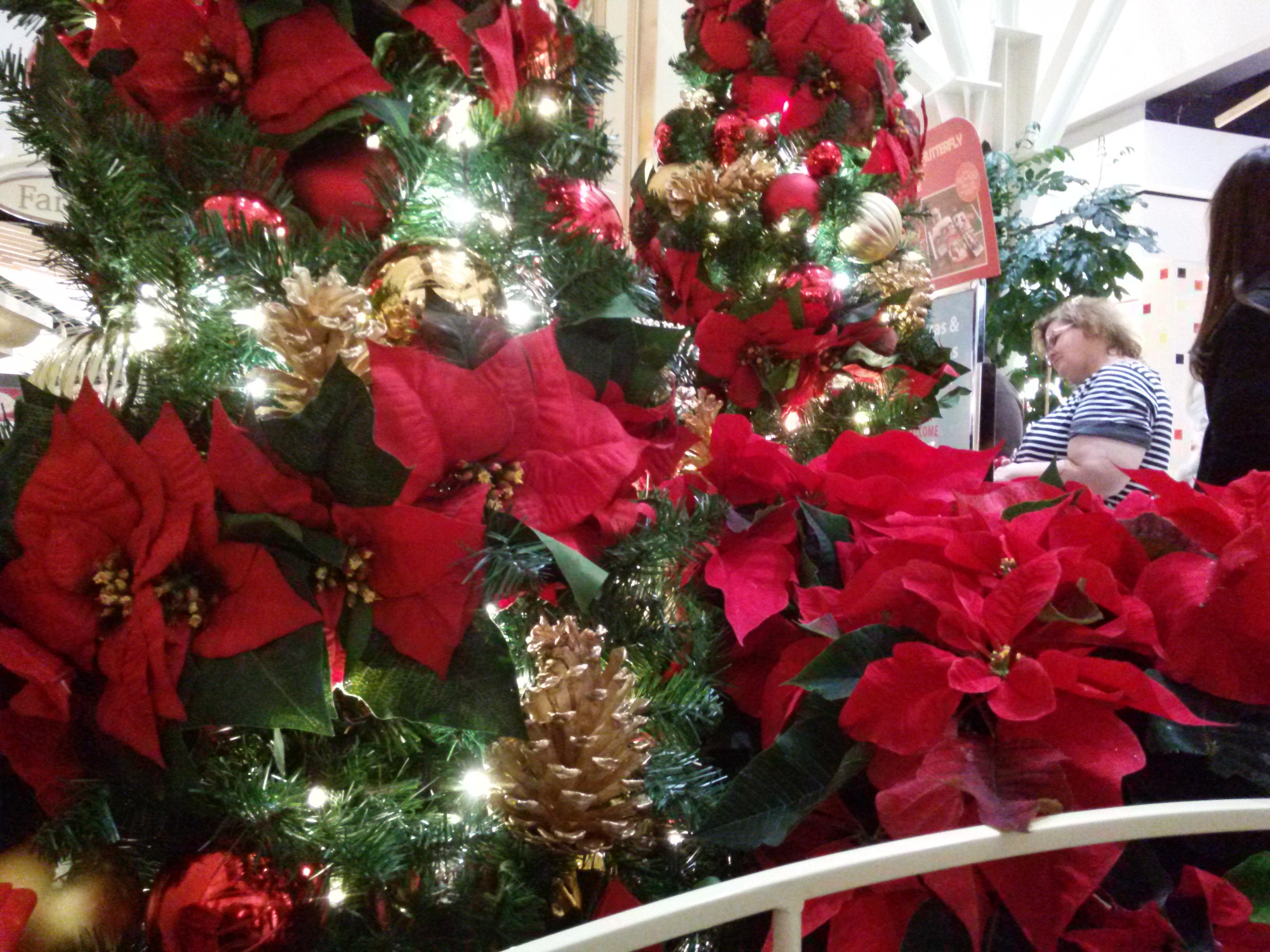 The #Smithpuppies visit Santa at Northwest Arkansas Mall ...